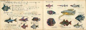 中学 時代 の 荒俣宏による『 金魚熱帯 魚 飼育日記』 大学